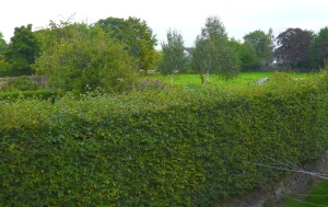 View over Porritt's field from the rear of a home in Cleasby Road
