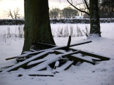 Growing timber and discarded timber in the snow