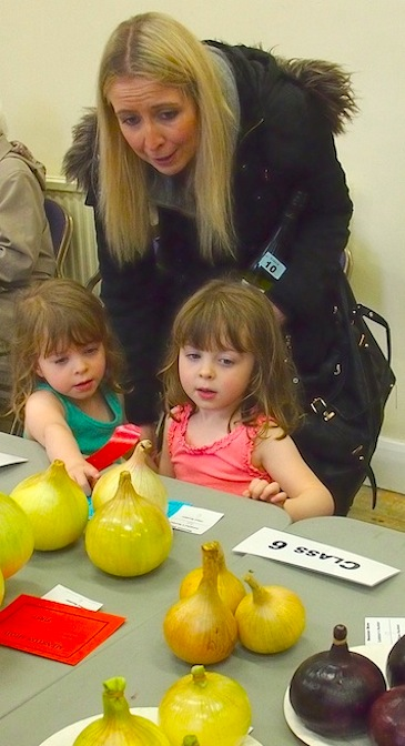 Toddlers are awed by the onions display