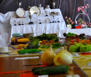 Vegetables waiting for a prize, or one of the trophies behind
