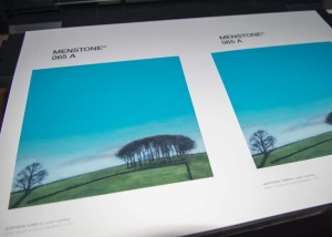 Prints of the elephant trees, photographed by Justin